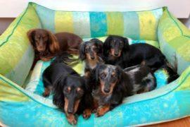 Auch unsere lieben Haustiere lieben Garnier Thiebaut